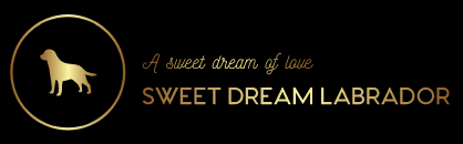 A sweet dream of love